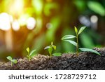Small photo of Agriculture and plant grow sequence with morning sunlight and dark green blur background. Germinating seedling grow step sprout growing from seed. Nature ecology and growth concept with copy space.