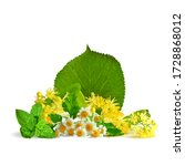 Daisy Flowers. Linden Flowers...