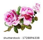 Watercolor Three Pink Roses ...