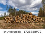 Log Stacks Along The Forest...