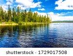 Forest Lake Trees Landscape...