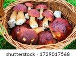 Porcini Mushroom Basket Top...