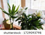 macro white peony flowers... | Shutterstock . vector #1729093798