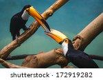 couple of toucans in love... | Shutterstock . vector #172919282