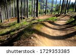 Spruce Forest In Which There I...