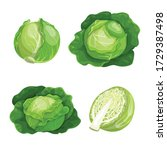 cabbages set. vector... | Shutterstock .eps vector #1729387498