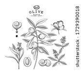 vector sketch olive decorative... | Shutterstock .eps vector #1729390018
