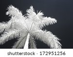 Infrared Photo Of Coconut Palm...