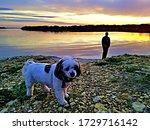 Dog Walking On Lake\'s Edge At...
