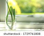 scallion  spring onion  green...