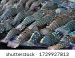 Fresh Blue Lobster In Seafood...