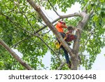 The Worker On Giant Tree