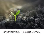 Young plant growing in black coal. Business revival concept.