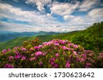 Mountain Laurel And...