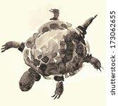 turtle | Shutterstock . vector #173062655