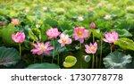 Lotus Flower Background Texture ...