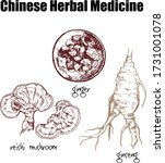 chinese medicine plants  roots  ... | Shutterstock .eps vector #1731001078