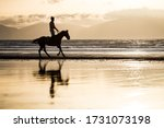 Silhouette Of Race Horse And...