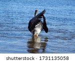 Domestic Grey Goose Waves Wings ...