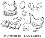 set of chicken eggs.  ollection ... | Shutterstock .eps vector #1731162568