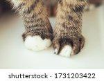 Velvet Paws. Cat's Foots. Legs...