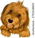 dog affenpincher briar brown... | Shutterstock .eps vector #1731418825