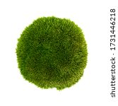 Green Moss Isolated On A White...