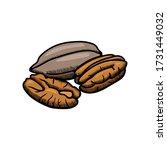 pecan illustration engraving...   Shutterstock .eps vector #1731449032
