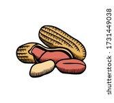 peanut illustration engraving... | Shutterstock .eps vector #1731449038