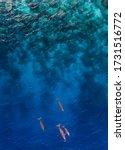 The colony of sea mammals...
