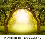 Fantasy Apple Trees Garden With ...