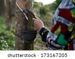 tapping latex from a rubber tree | Shutterstock . vector #173167205