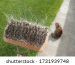 A Cat Brush With Cat Fur In It...