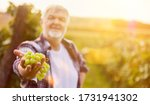 Wine Grower Holds White Grapes...