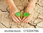 hands growing a tree growing on ... | Shutterstock . vector #173204786
