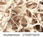 Realistic Bone Spongy Structure ...