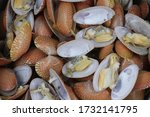 Small photo of Closed up fresh baby clams, venus shell, shellfish, carpet clams, short necked clams, as raw food from the sea are the seafood ingredients. fresh clams Background. seafood.