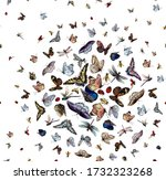 Pattern With Butterfly ...