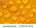Large Drops Of Water On The...