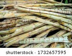 Pattern Of Sugarcane Bagasse ...