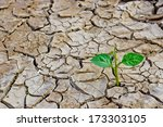 Tree Growing On Cracked Earth   ...