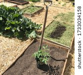 Small photo of Empty bed with tomato plant and spate in vegetable garden