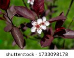 Close Up View Of Dainty Red An...