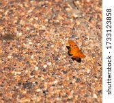 Orange Monarch Butterfly With...
