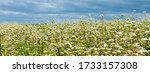 rural landscape   blooming... | Shutterstock . vector #1733157308