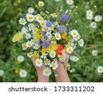 Close Up Of Wild Flower Bouquet ...
