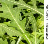 close up on the heap of rucola  ... | Shutterstock . vector #173340182