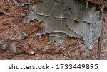 Closeup Of Rough Patch Of Grey...