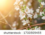 Bee Pollinating Flowers Of The ...