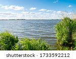 A Lake With Aquatic Plants In...
